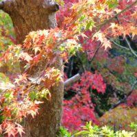 Herfst Kyoto